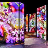Expo florea 2